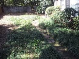 frank u0027s lawn care 115 waccamaw 03 16 17 cleanup