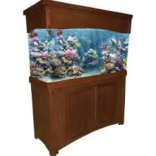 r j enterprises fusion 50 gallon aquarium tank and cabinet rj enterprises aquariums you ll love wayfair