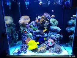 led reef aquarium lighting the next generation in pendant led lights orphek dip pendant
