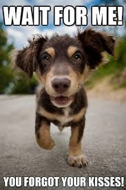 Puppy Face Meme - don t go without a proper goodbye funny memes pinterest