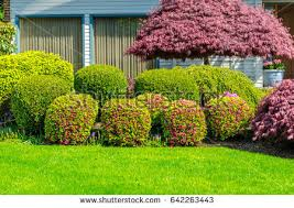 In Front Yard - front yard stock images royalty free images u0026 vectors shutterstock