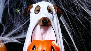 halloween background 1280x720 download wallpaper 1280x720 halloween holiday dog ghost jack