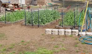 georgia home garden garden update march 20th