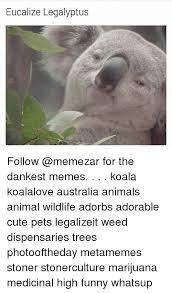 High Koala Meme - eucalize legalyptus follow for the dankest memes koala koalalove