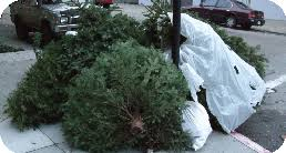 Christmas Tree Pick Up Multi Family Apartments Southland Disposal