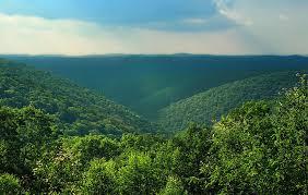 Pennsylvania forest images Forestry for the birds audubon pennsylvania jpg