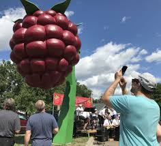 hopkins is now the home of the world u0027s largest raspberry monument