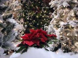 Christmas Trees Nc Christmas Across The Carolinas Great Wolf Lodge Concord North