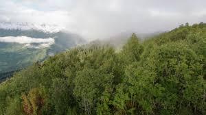 mountain forest 2k stock 883 264 802 framepool