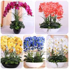orchid plants aliexpress buy orchid seeds high simulation flower