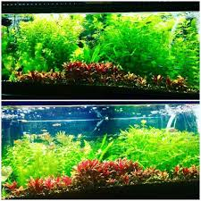 t5 lighting fixtures for aquariums pur pas par in aquarium reef planted lighting led wavelengths