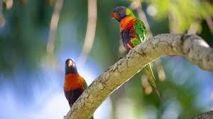 Rockhton Botanic Gardens And Zoo Bird Pictures View Images Of Rockhton Botanic Gardens And Zoo