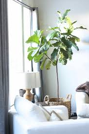 indoor tall house plants low light plants you probably canut kill