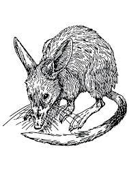coloring page of a rat coloring page rat coloring page rat cute rat coloring pages