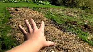 using chicken manure in your garden youtube