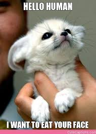 Too Cute Meme Face - cute baby animals with captions hello human i want to eat your