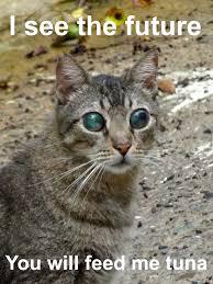 Psychic Meme - hungry psychic cat by bommshakalaka meme center
