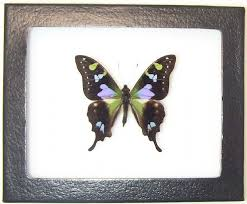 butterfly gifts butterfly gifts and decor butterfly collection butterflies and