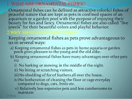 aquarium and ornamental fish ppt