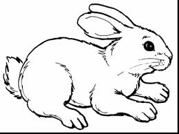 incredible realistic rabbit coloring pages with bunny coloring