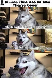 Dog Jokes Meme - 236 best huskey dog thoughts images on pinterest corny jokes