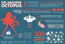 national aquarium giant pacific octopus