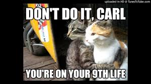 Good Cat Meme - feel good inc with cat meme youtube