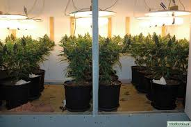 t5 fluorescent grow lights review magnetic induction grow lights plasma grow lights do they work