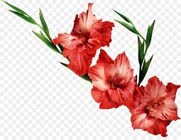 gladiolus flower gladiolus flower clip gladiolus png clipart png