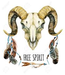 ram skull sheep skull with feathers and arrow isolated on white