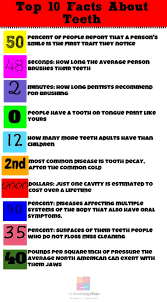 facts about teeth number by number smiles change lives