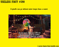 did you facts gif find on giphy