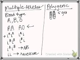 image gallery multiple alleles