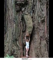 Tree Meme - tree trunk memes funny tree trunk pictures memey com