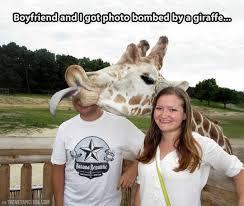 Giraffe Hat Meme - giraffe in birthday s hat funny picture