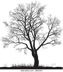 walnut tree in winter stock photos walnut tree in winter stock