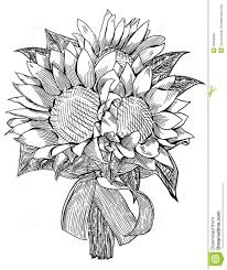 wedding flowers drawing sunflower wedding bouquet royalty free stock image image 35333956