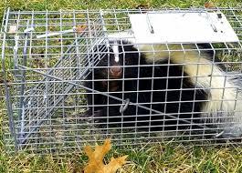 skunks lakewood exterminating