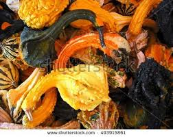 goose gourds top view variety colorful ornamental gourds stock photo 469625840