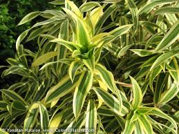get rid of mold successfully with these common house plants