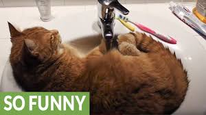 cat decides to chill out in bathroom sink youtube