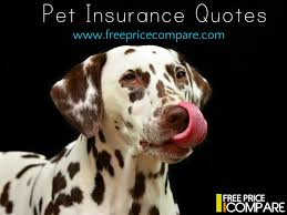 compare pet insurance quotes uk raipurnews