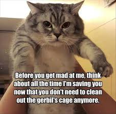 Funny Animals Meme - funny animals of the day 17 photos famepace
