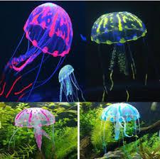 canada aquarium plants supply aquarium plants canada dropshipping