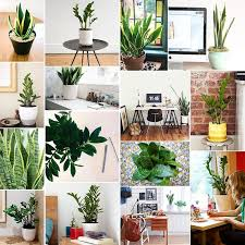 low light plants for office treat yourself our favorite desk plants low light plants and desks