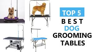Best Dog Grooming Tables Top 5 Best Dog Grooming Tables Review