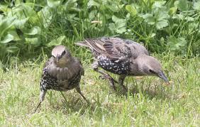 birds transition