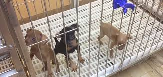 California Wildfires Pets by California Set To Ban Dog And Cat Sales At Pet Stores Steve Dale