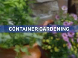 container gardening u2013 gardeners advice