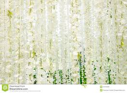 White Flowers Pictures - backdrop for wedding white flowers stock photo image 50763499